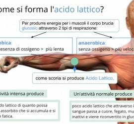 come si forma acido lattico nei muscoli