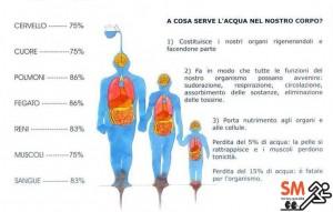 Personal Trainer Bologna - funzioni dell'acqua nel corpo umano