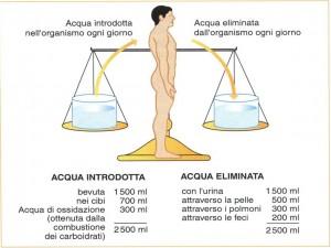 Personal Trainer Bologna - il bilancio idrico del corpo è dato dai liquidi assunti con l'alimentazione meno quelli persi con le funzioni vitali