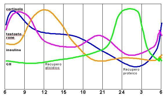 Il ciclo circadiano del cortisolo, testosterone, dell'insulina e dell'ormone della crescita GH