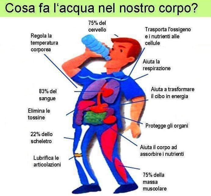 Personal Trainer Bologna Stefano Mosca l'importanza dell'acqua per chi pratica attività fisica